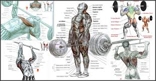 the 5 best bodybuilding exercises