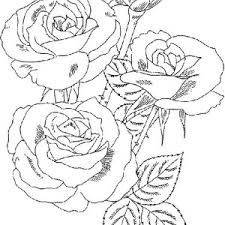 Small Picture Roses Flower Bouquet Coloring Page Roses Flower Bouquet Coloring