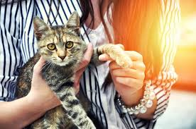 Cat Adoption Checklist American Humane