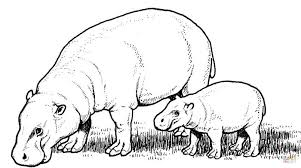 Small Picture Coloring Pages Animals Hippopotamus Mother With Baby Coloring