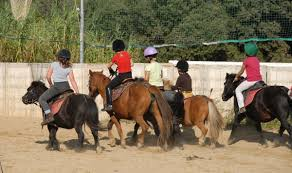 The Effect Of Rider Weight On Horse Performance The 1
