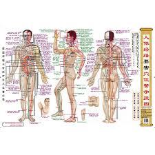 Acupuncture Point Chart Free Humans Dangerous Acupuncture Points Warning Chart For