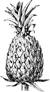 pineapple clipart black and white. free pineapple clipart 1 page of public domain clip art image 0 2 black and white