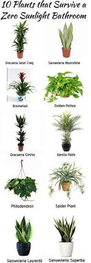 Image Indirect No Sunlight Plants Plants For Bathroom Bathroom Flowers Best Plants For Bedroom Garden Ellorametalscom 39 Best Plantsno Sunlight Needed Images Indoor Plants