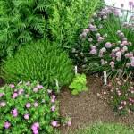 Small Picture Culinary Herb Garden Design Landscaping Gardening Ideas