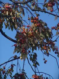 Fruit U0026 Nuts  MSU ExtensionFruit Trees In Michigan