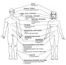 Разрушающие Здоровье Человека Реферат Факторы Разрушающие Здоровье Человека Реферат