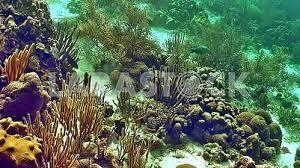 Real Underwater World Real Underwater World R Nongzico