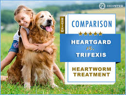 Heartgard Vs Trifexis Comparison And Key Differences