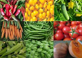 why florida backyard vegetable gardener heirloom seeds