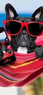 Black dog, sunglasses, phone, funny ...