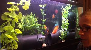 Image result for fish tank or aquarium