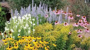 early spring perennials. Perfect Perennials Summer Dreams PrePlanned Garden For Early Spring Perennials