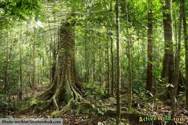 amazon river animals and plants. What Is In The Amazon Rainforest For River Animals And Plants