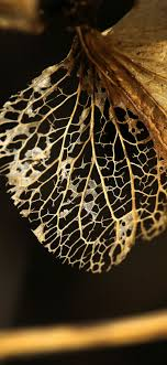 Wallpaper Dry leaf 5120x2880 UHD 5K ...
