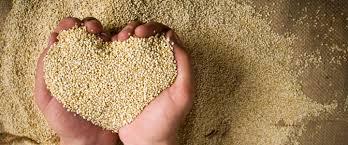 """Résultat de recherche d'images pour """"quinoa"""""""