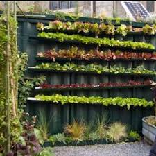 Vertical garden urban art