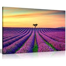 purple lavender field with orange sunset canvas wall art picture print 24x16  on graham brown lavender sunset wall art with graham brown 40 886 lavender sunset printed landscape canvas wall