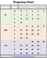 Pregnancy Charts Sada Margarethaydon Com