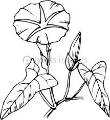 夏の花の写真イラスト素材 写真素材ストックフォトの定額制ペイレス
