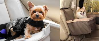 dog booster car seats comparison guide