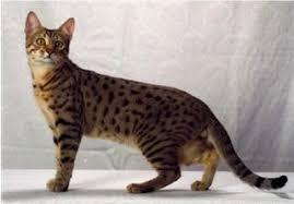 Cats Aren't Pink (Char. Gallery) Images?q=tbn:ANd9GcQ83WiZ1lWTv7KDAQdu9Ze1JXSNcW4i6XcYvusrbFBH7onuqmRd