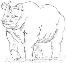 Wild drawing of animals Kids Wildlife Pencil Drawings Animals From The Forest Ayoqqorg Free Images Of Wild Animals Only Outline Download Free Clip Art