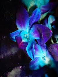 blue and purple orchid wallpaper