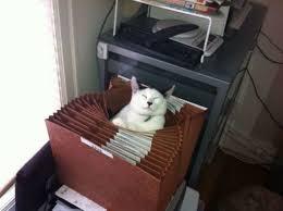 Resultado de imagen de gatos escondidos