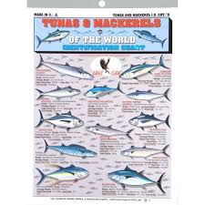 Tuna Fish Size Chart Buy Fishermans Tuna And Mackerel Id Chart 9 In Cheap Price
