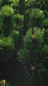 Tree, Pine, Green iPhone Wallpaper ...