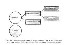 Реферат Торможение условных рефлексов Типы и особенности высшей  Типы и особенности высшей нервной деятельности человека