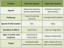 Comparative Functions Of Nervous And Endocrine Systems Chart What Is The Difference Between Hormones And