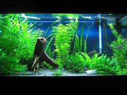 Peculiar Look with Fish Aquarium Decorations : Fish Aquarium Decor Ideas.