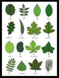 Herbs Table Chart Pdf In 2019 Leaf Identification Tree