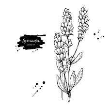 Bloemen Wit Zwart Fotos Afbeeldingen En Stock Fotografie 123rf