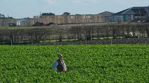 garden supplies melbourne south east. garden paa houzz supplies melbourne south east