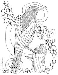 Small Picture New Magpie Coloring Page Short Leg Studio