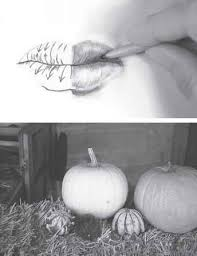 pumpkin drawing with shading. pencil realistic drawing illusion pumpkin with shading