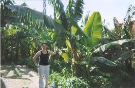 Gay banana island luxor