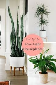 these indoor varieties are perfect for gardening beginners our top ten low light houseplants thrive in unexpected conditions and are super easy to grow