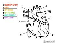 Small Picture Anatomy Coloring Pages Middle School Coloring Pages For All Ages