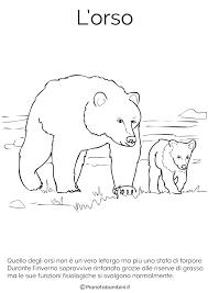Disegni Di Animali Che Vanno In Letargo Da Colorare Pianetabambini