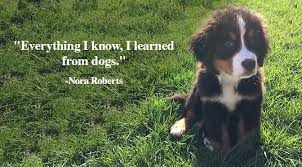 Quotes About Dogs Impressive 48 Inspirational Quotes About Dogs That Will Make Your Day The Dog