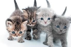 Kitten Color Chart When Do Kittens Eyes Change Color Catster
