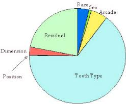 Tooth Position Chart Pie Chart Showing The Apportionment Of Tooth Size Variation