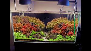 Light Requirement For Planted Aquarium Advanced Guide To Lighting A Planted Tank Basics First