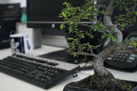 Image Desk Desk Bonsai Tree Creative Office Bonsai Tree With How To Care For An Inside Office Desk Losangeleseventplanninginfo Desk Bonsai Tree Drumfusecom