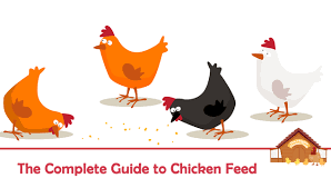 Poultry Feed Chart The Complete Guide To Chicken Feed