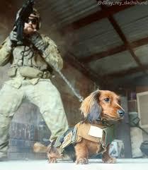 Dog Resume Training Template Walker Skills Little Riddles Rescue